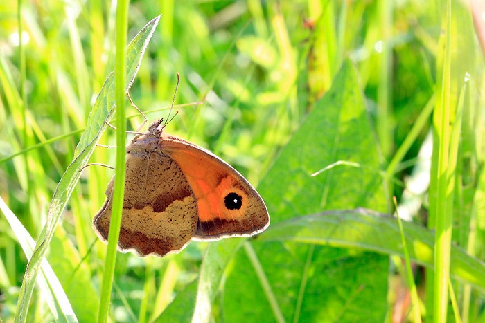 Macro 2010 Papillon
