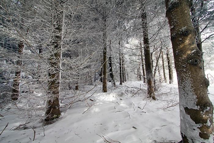 Randonnée pédestre : Aubrac: Randonnée pédestre sur le sentier botanique de Laguiole