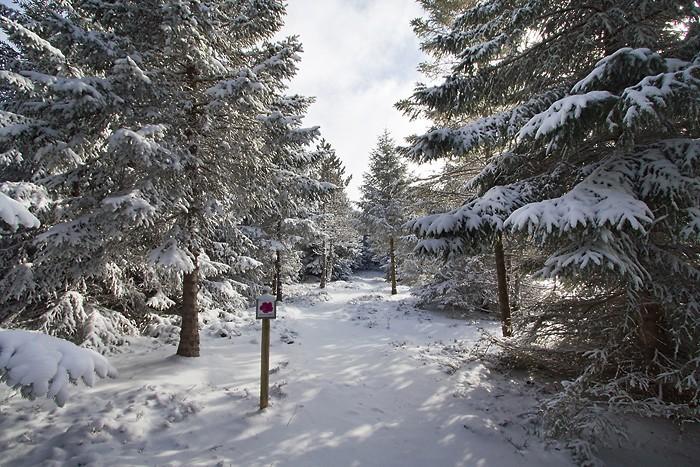 Circuit de randonnée du sentier botanique de Laguiole