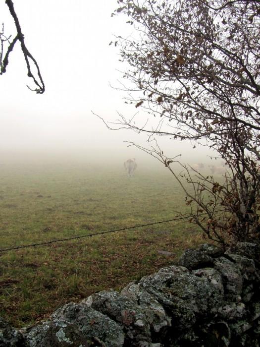 Randonnée en Aubrac Saint Chély d'Aubrac AVEYRON