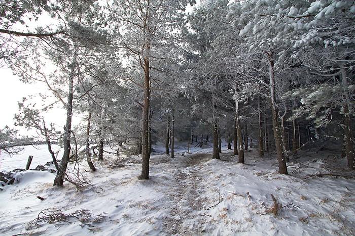 Randonnée en Aubrac avec la neige