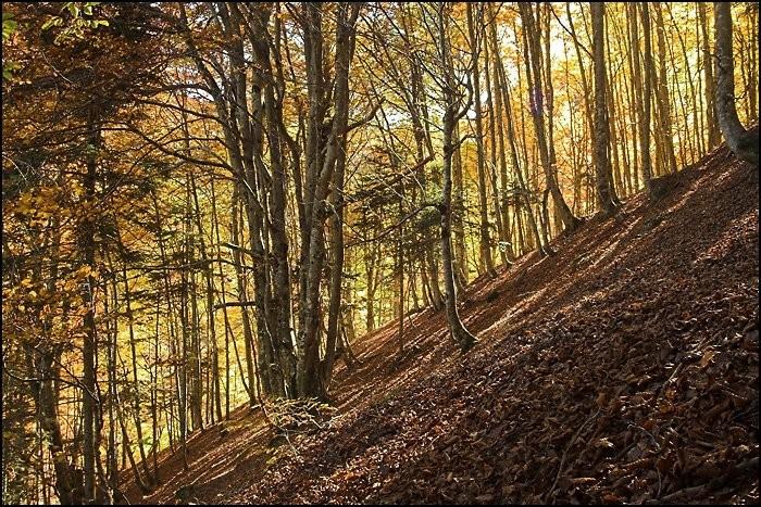 Randonnée pédestre : Couleurs d'automne