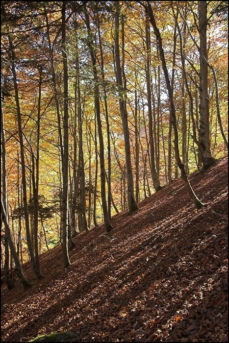 Lever de soleil dans la forêt