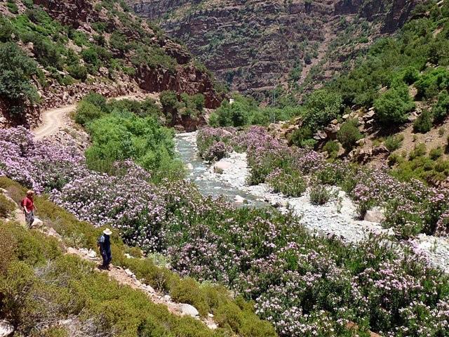 Trekking : Trekking dans la vall�e des roses au Maroc