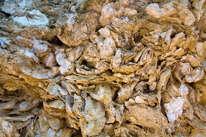 Huitres fossilisées de Sainte Croix du Mont