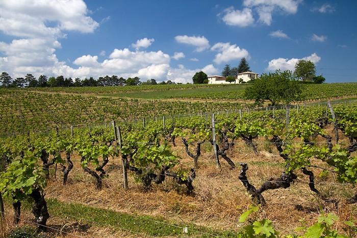 Randonnée dans les vignes autour de Sainte Croix du Mont