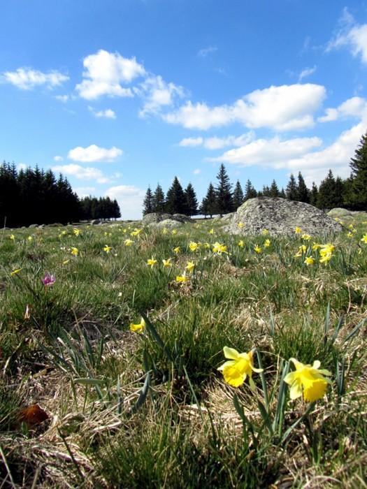 Visiter et découvrir le plateau de l'Aubrac en Aveyron