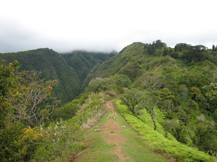Randonnée pédestre : Randonnée au Mont Aorai à Tahiti