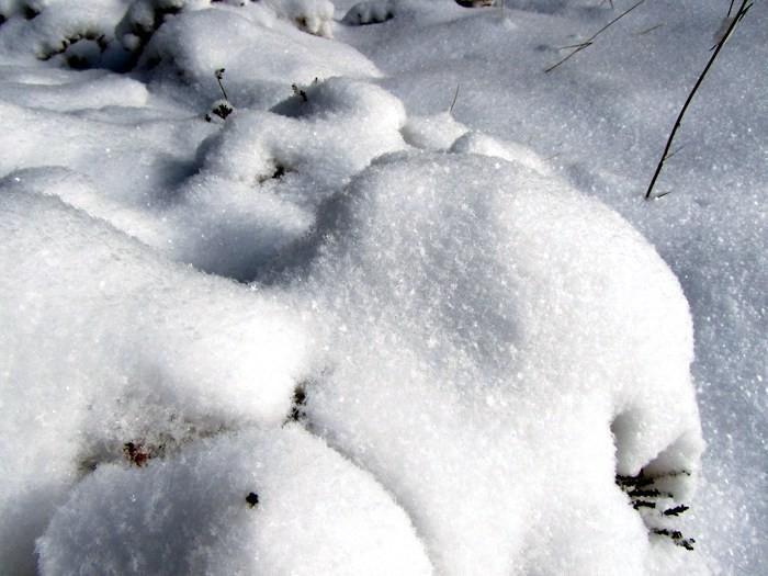 Neige dans la forêt d'Aubrac