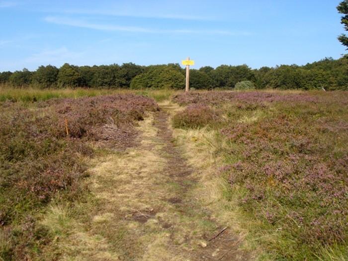 Sentier Botanique au départ du Bouyssou