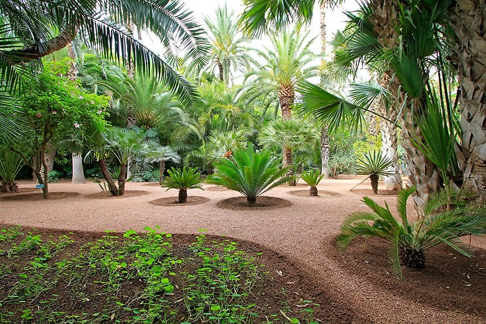 Balade : Balade dans le jardin Majorelle de Marrakech au Maroc