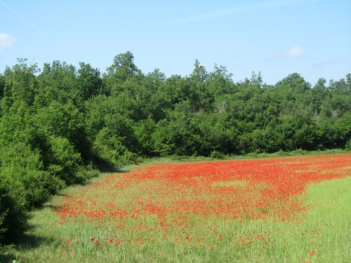 Paysage près de Villefranche du Périgord