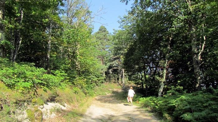 Randonnée en forêt en Viadène, près de Montézic et de son barrage