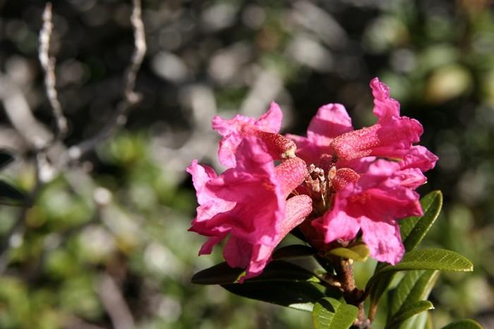 Découverte : Les Jardins de Haute Savoie au Lac de la Balme de Sillingy