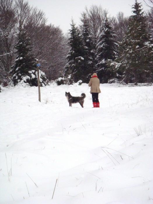 Neige sur l'Aubrac près de Laguiole