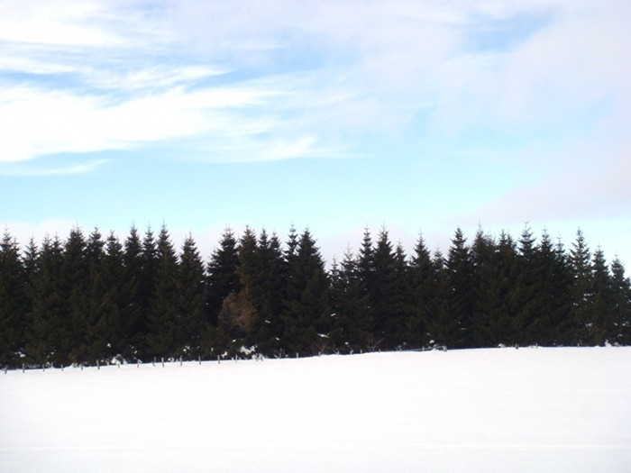 Forêt sur l'Aubrac