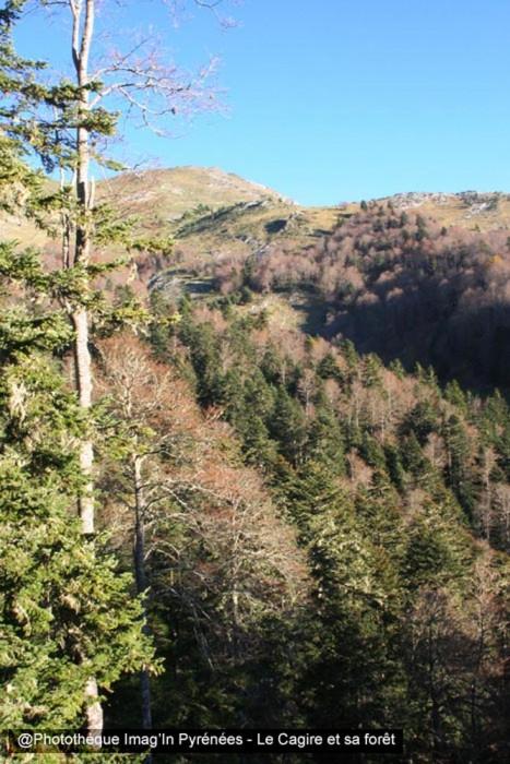 Cagire et sa forêt