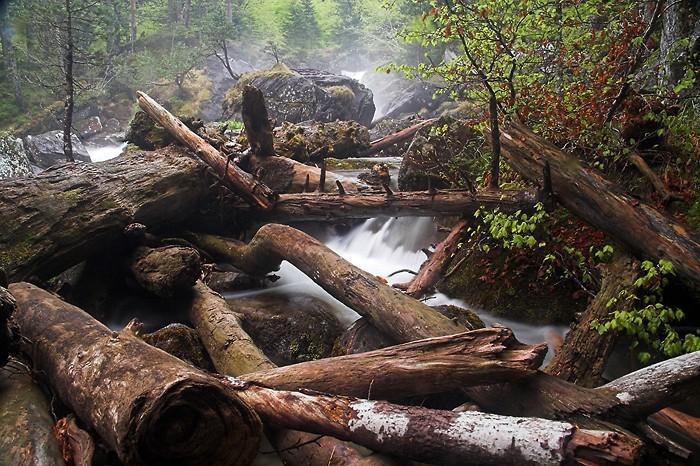 Troncs d'arbres dans la rivière