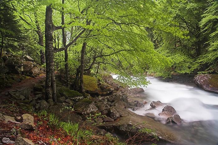 Chemin des cascades au dessus de Cauterets