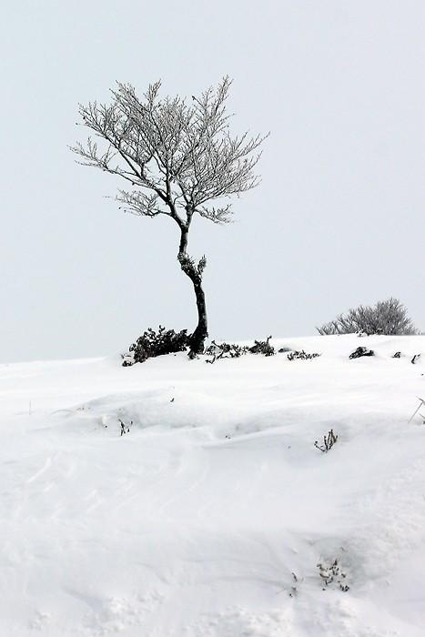 Arbre solitaire sur le plateau de l'Aubrac
