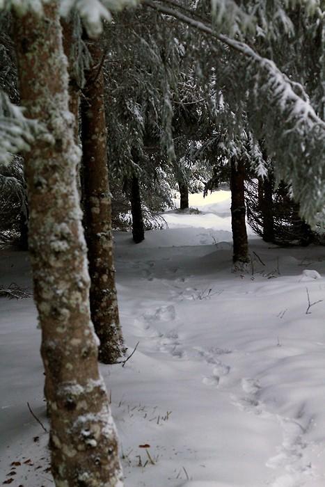 Neige sur le sentier botanique de Laguiole