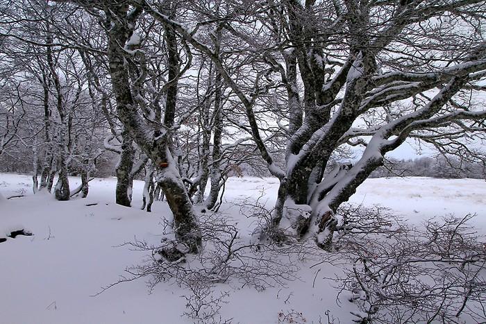 Sentier botanique de Laguiole en Aveyron