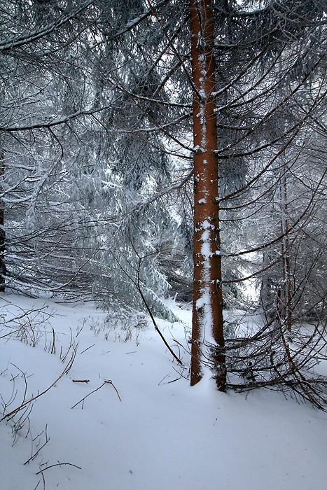 Beaucoup de neige sur le sentier et sur les arbres