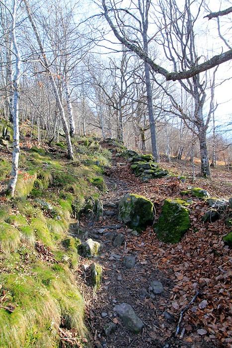 Le sentier monte dans la forêt