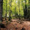 Forêt après le départ