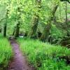 De belles couleurs vertes dans cette forêt de Huelgoat
