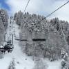 Neige sur les sapins à Barèges