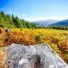 Passage dans les foug�res en Irlande