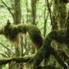 Forêt du Gourgue d'Asque