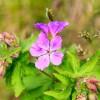 Fleurs de début juillet
