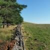 Le long du bois