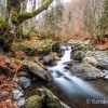 Balade dans la forêt au milieu des cascades