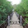 Sur un pont en bois dans la mangrove