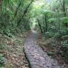 La voie pavée traverse la foret