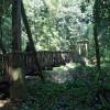 Passerelle dans la forêt de la pluie