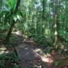 Randonner dans la forêt humide, que c'est beau !