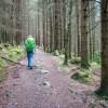 Début de la balade dans la forêt