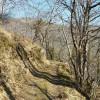 Sur le chemin boisé de la hêtraie