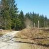 La piste qui va dans la forêt