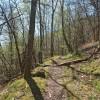 Le sentier qui grimpe dans le bois