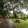 Balade dans le jardin botanique de Deshaies