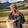 Un éleveur d'alpaga vient nous parler de son métier