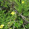 Randonnée Aubrac: la nature reprend ses droits