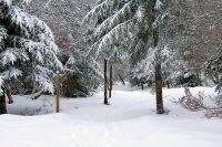 Activités outdoor : Randonnée dans la neige sur le sentier botanique de Laguiole