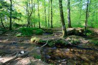 Activités outdoor : Forêt du Cranou