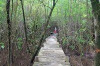 Activités outdoor : Randonnée dans la mangrove depuis l'Anse du Souffleur